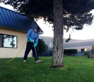 Tree Health Services Ventura