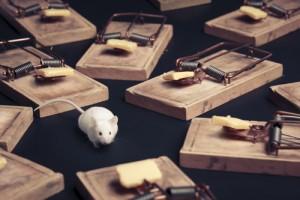 Mice Prevention Tips