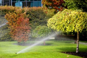 How to Keep Your Trees and Plants Happy and Healthy