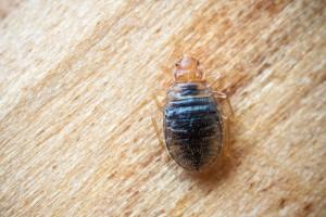 Debug Bed Bugs