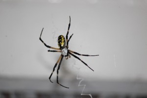 Prevent Spiders In and Around Your Home