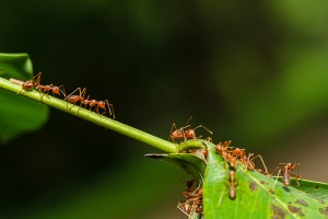 How to Prevent Ant Infestations
