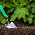 preventing garden pests