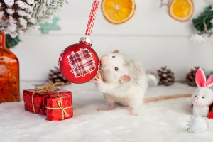 avoid holiday pests